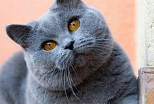 Kattenkatjes