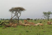 African adventures