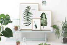 Go green - plantas / Amor por las plantas en la decoración