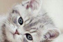 Momma wants a kitty