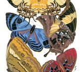 DoverPictura Insect Clip Art / Beautiful Royalty Free Clip Art / by Dover Publications