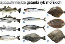 ryby i zwierzęta wodne