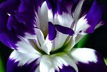 Цветы, растения