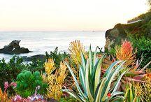 Coastal Gardens / Landscapes near the ocean