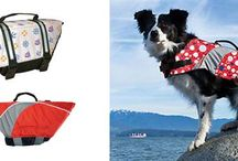 Dog outdoor and indoor pieces for every season