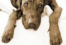 Das beste was mir passieren konnte mein Viszla. / Viszla die besten Hunde / by Claudia Lenzmann