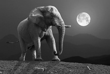 Animals - Elephants / by Jan Vafa