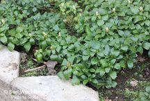 Varjoisan paikan kasvit