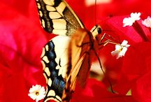 Amazing Pictures-Butterfly / Discover amazing pictures of butterflies