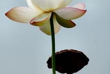 Bloemen /planten