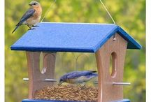 Bird Feeders / Ways to attract birds to your home / by Evelyn Saenz