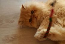 I miei amori  / Il regalo più bello il mio gattino persiano