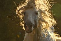 Animals / by Ariel Rohbock