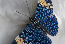 Entoma / Πεταλουδες