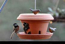 Madáretetők, madároduk