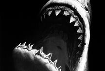 Shark Art / by Tarek Awad