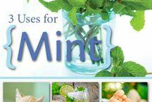 Herbal Food