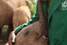 Beautiful elelphants