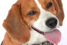 Pinning for Pets / by Life With Beagle