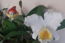 Orquideas e jardim
