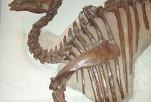Paleontology - Динозавры-раскопки