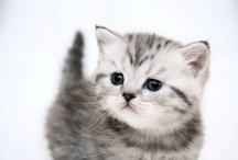 Kawaii / Animals are such agreeable friends - they ask no questions; they pass no criticisms. -- George Eliot