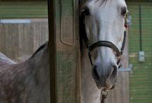 Pferde♥
