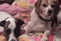Oscar, Lulu and Friends