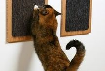 Coisas de gatos