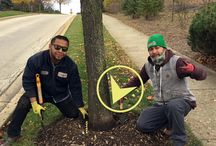 #ExposeYourFlare / Choosing to elevate the green industry by teaching how to plant shrubs and trees correctly.