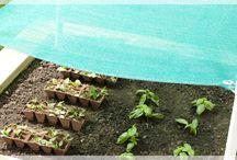Garden and Yard / by Denise Sanchez