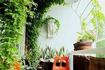 Amenajare gradina interioara