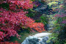 Autumn / Otoño / A new season is coming....
