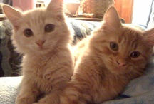 Kitty stuff / Helpful pet care tips for myself & other pet owners