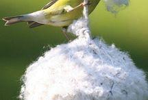 birds / by Leslie Lescalleet