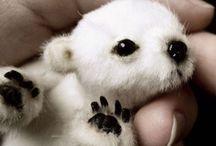 animals i want!! / by Sabrina Bozich