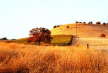Towns of Amador County - Plymouth