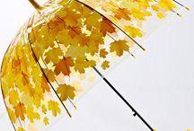 Şemsiye Umbrella