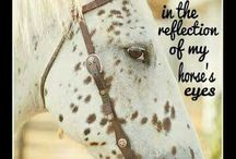 Quotes with Horse Pictures