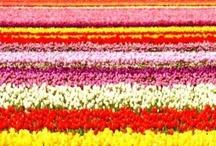 Flowers, flowers, flowers / by Kristin Frasier