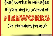 Dogs Thunderstorms
