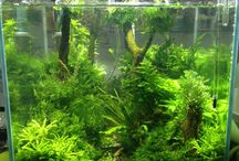 FISH TANKS/AQUARIUMS / Ideas for plants, fish, and other creatures that can go in aquariums, tanks, and planted tanks.