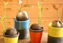 ラブ観葉植物♥︎♥︎♥︎