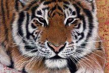 Animal Paintings / Animal Paintings by Artist Marc Alexander