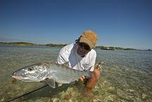 Fishing Bahamas - Freeport, Grand Bahama / Our #1 operator in Bahamas - H2O Bonefishing