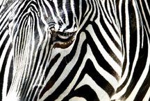 Animals / by Nichole Porter
