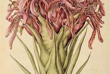 ботанический стиль