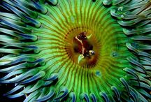 couleurs ocean