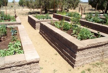 Community Garden / Several members and residents of Talking Rock in Prescott, Arizona contribute to a community garden in which fresh fruits and vegetables are grown throughout the year.