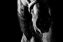 My love. / Horse